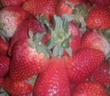 Venta de Frutillas
