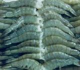 Camarones de Exportacion Mayor Y Menor