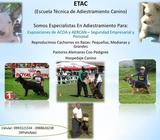 Escuela De Adiestramiento Canino